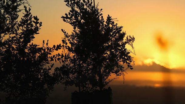 "<p style=""text-align: justify;"">В Індії за півдня посадили 66 млн дерев, фото Getty</p>"