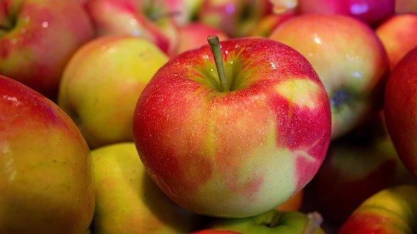 Користь і шкода яблук: кому можна, а кому не можна їсти цей фрукт