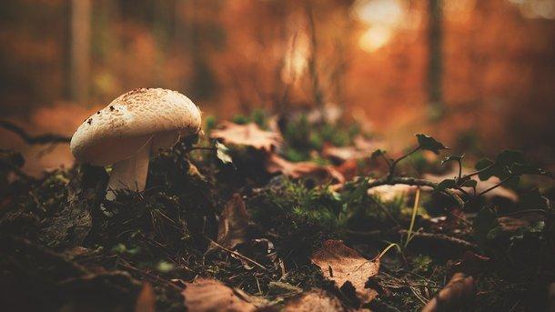 Четверо дітей отруїлося грибами наВолині