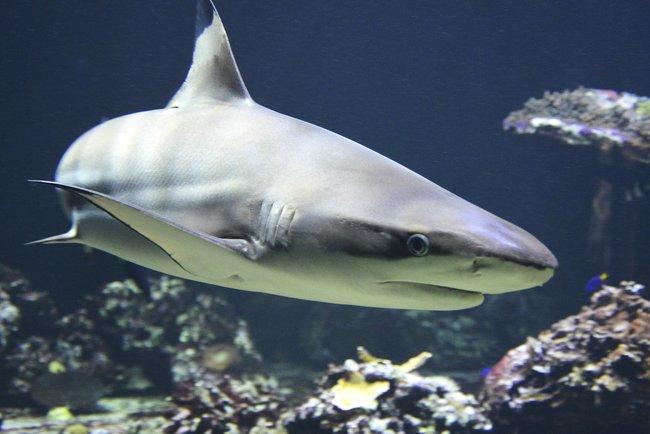 У Техасі з океанаріуму вкрали акулу і вивезли її в дитячому візочку