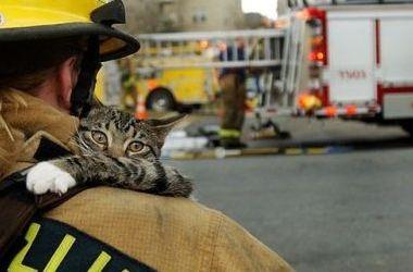 Картинки по запросу рятувальники зняли кота