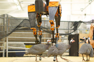 "<p style=""text-align: justify;""><span>Фото: Dynamic Robotics Lab/Oregon State University</span></p>"