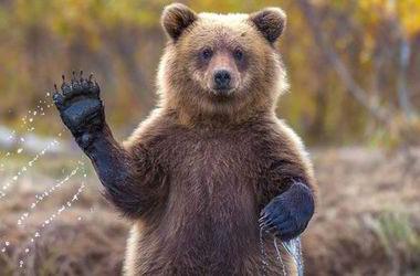 Кто из этих животных живёт в Евразии а кто в Северной
