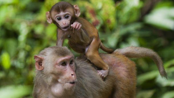 Собаки і мавпи обирають добрих людей – дослідження
