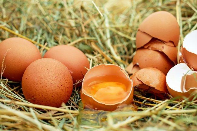 egg-1510449_960_720_01