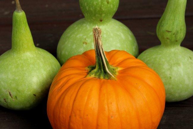 pumpkin-3719654_960_720