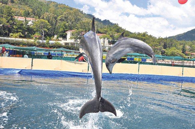 dolphin-park-11-12