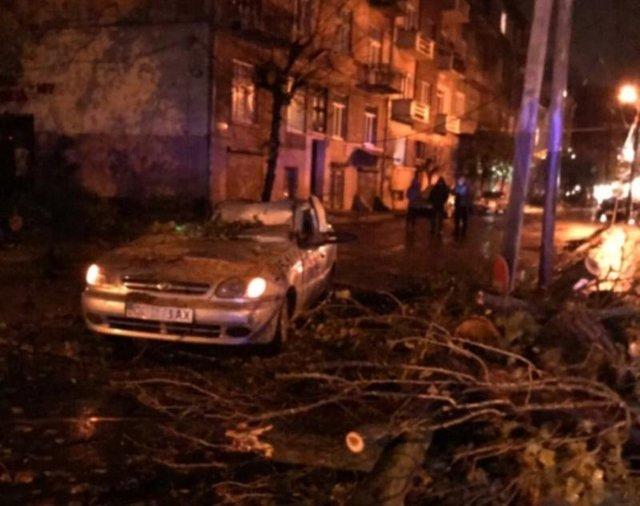 НаПрикарпатті надитину впало дерево