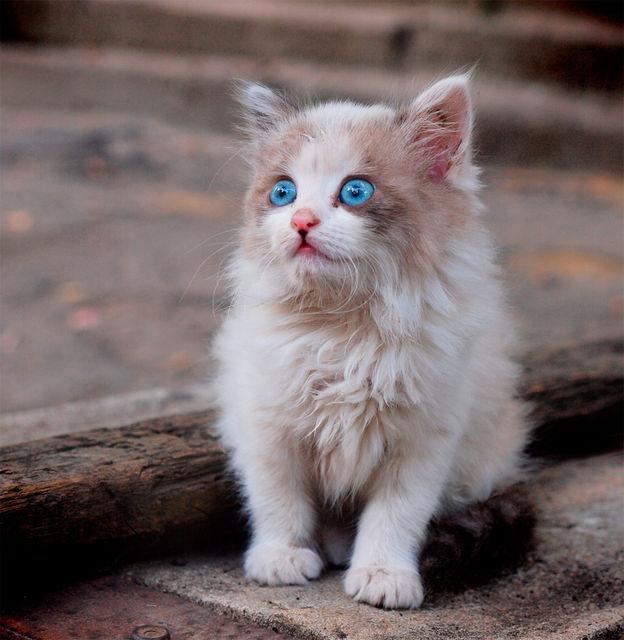 Картинки по запросу дворовий кіт