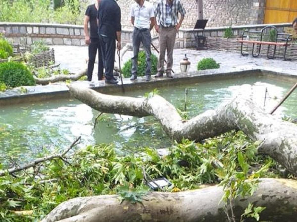 Картинки по запросу Названа причина падения на туристов ветки 500-летнего дерева в Азербайджане